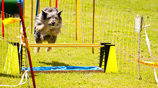 healthy dog jumping over fence