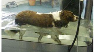 dog walking in aquatic treadmill